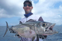 dogtooth tuna fishing at trees and fishes