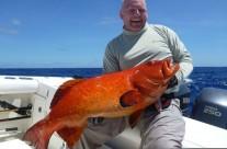 red bass fish vanuatu