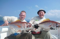 two red bass fish