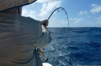 Westwood Vanuatu actual fishing