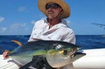 Westwood Vanuatu yellow fin fish