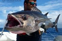 Sean Tieck crew dogtooth tuna fishing